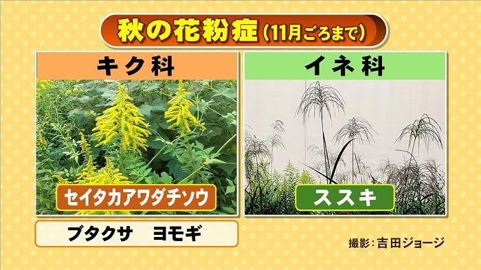 秋の花粉症に注意!|東海テレビ | ジョージの天気上々!
